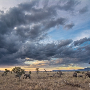 Il tramonto in compagnia di un branco di elefanti