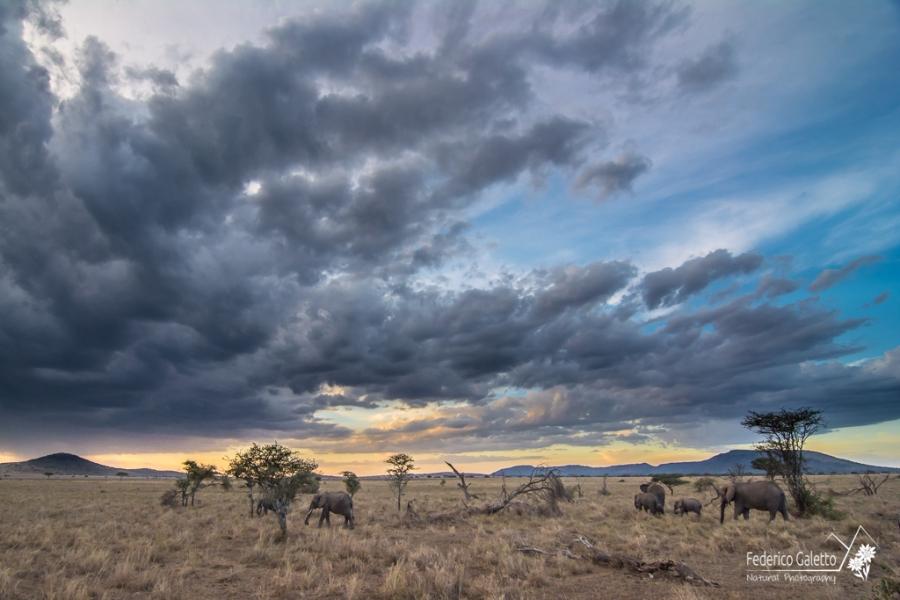 Africa - Il tramonto in compagnia di un branco di elefanti