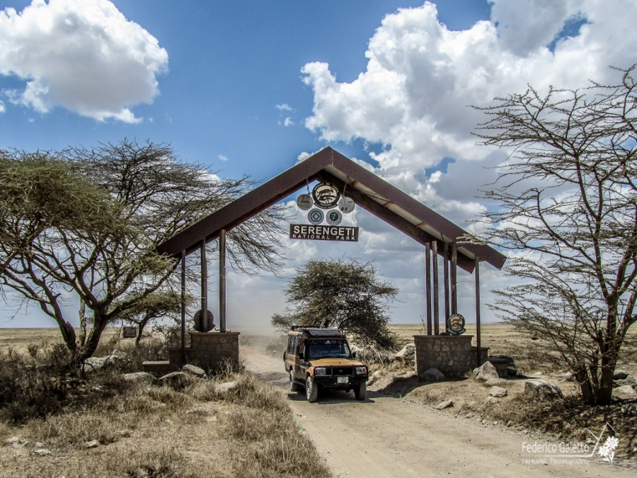 Africa - Ingresso nel Serengeti