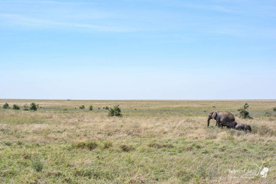 Africa - Le praterie sconfinate