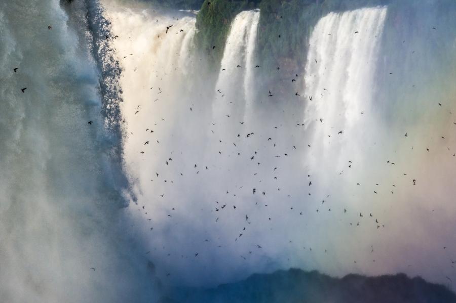 Rondoni Iguaçu
