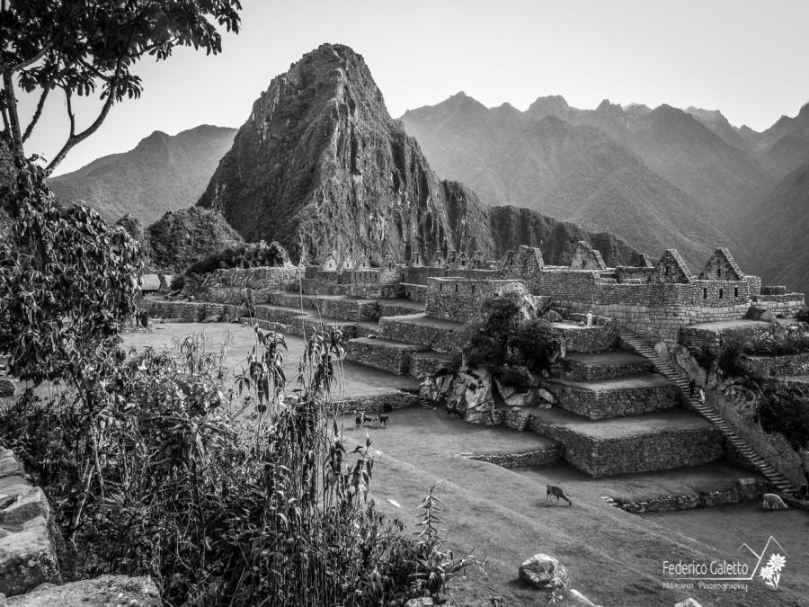 I Lama che pascolano tranquilli nel prato contribuiscono a sospendere la città da ogni legame temporale col presente.