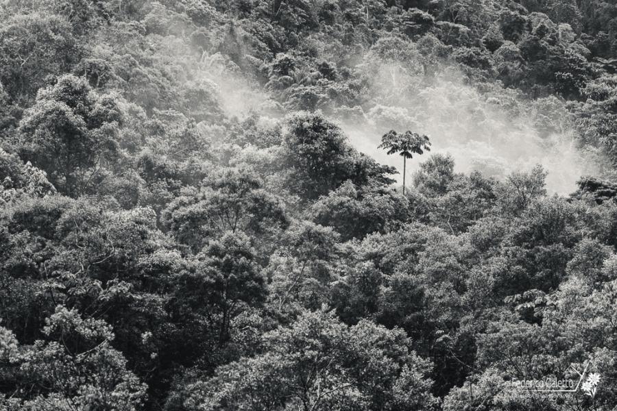 La foresta Atlantica si sveglia tra i vapori, mentre mi inoltro tra i pendii nei pressi della Riserva Guainumbi