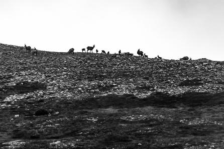 Un gruppo di camosci compare sulla cresta, e il loro profilo stacca nettamente con il cielo avvolto nelle nebbie.