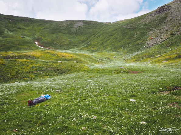 Lo spettacolo di una fioritura d'alta quota, che scende come un fiume giallo e bianco le pareti del monte Gran Costa, sopra Pragelato