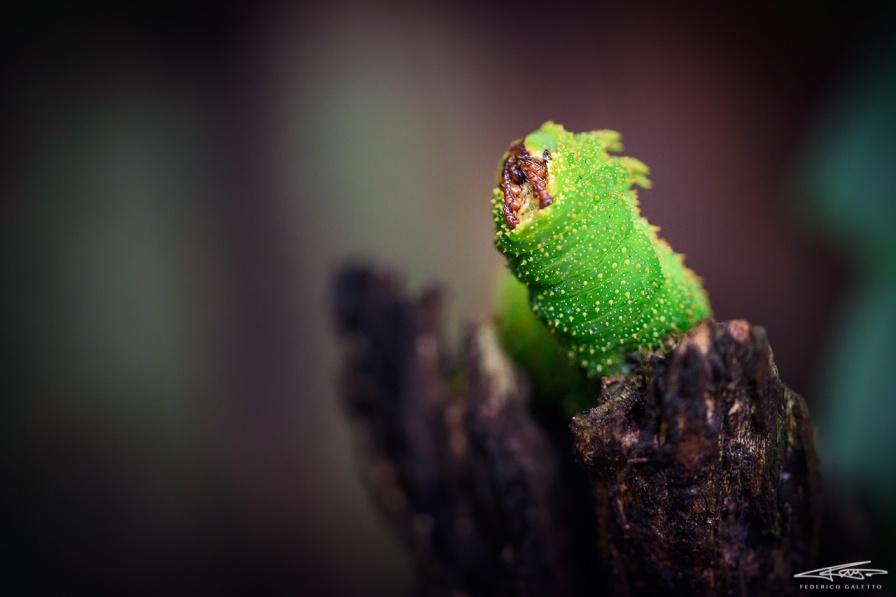 Un bruco, dalle incredibili forme e colori del microcosmo dei piccoli abitanti della foresta